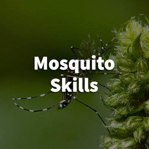 Mosquito Pest Control in Landrum, South Carolina