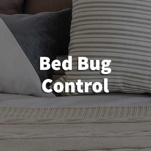 Bed Bug Pest Control in Lyman, South Carolina
