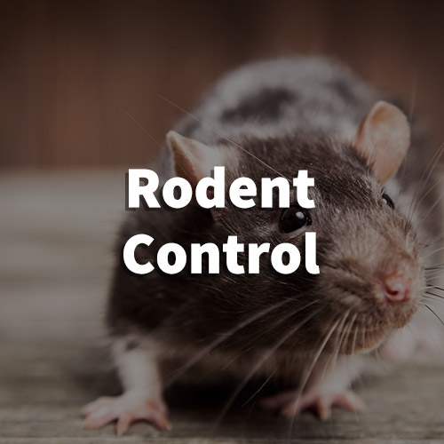 Rodent Pest Control in Lyman, South Carolina