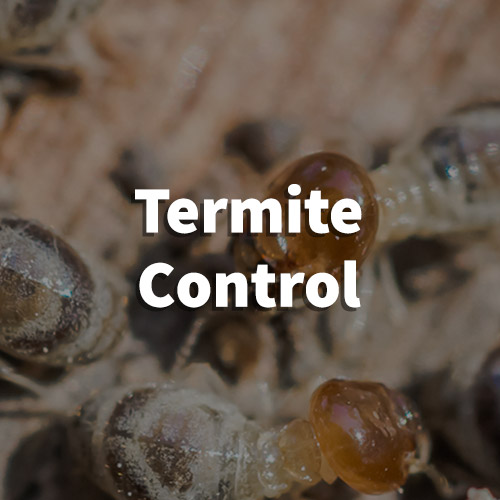 Termite Pest Control in Lyman, South Carolina