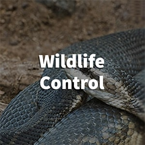 Wildlife Pest Control